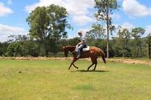 Chestnut Throughbred Mare for Sale Booubyjan Gympie Area Preview