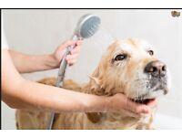 Professional Dog Grooming, Dog Walking & Pet Garden Clean