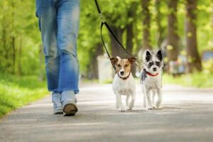 Hamilton Dog  sitter and / or dog walker