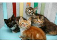 Cute kittens for sale
