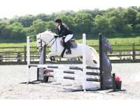 13.2 Irish Sports Pony (LHC)