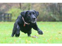Dog walker and petsitter offers dog walking, petsitting, pet visits Inverness, experienced, mature