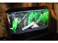 Fish aquarium ( everything included)