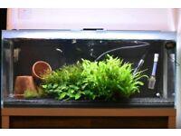 Fluval M90 Tropical / Marine Fish tank