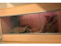 Female corn snake and complete vivarium set up for sale