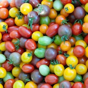Tomato-Seeds-Rainbow-Cherry-Heirloom-Vegetable-Garden-Variety-50-Seeds