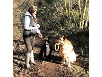 Dog Walker & Pet Sitter - Little Zara's Pet Services - Markfield & Surround areas