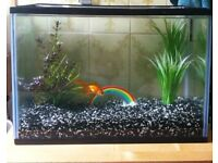 25L fish tank and goldfish and accessories full set up