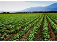 Unscreened Top Soil £50 per tonne