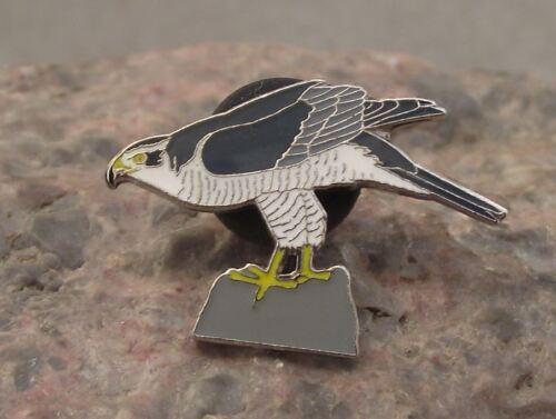 North American Northern Goshawk Eagle Hawk Raptor Prey Bird Brooch Pin Badge