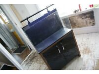 Lovely fish tank and black stand with all accessories ready to go