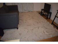 Shag area rug - 245cm x 305cm