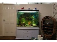 Large fish tank from Italy