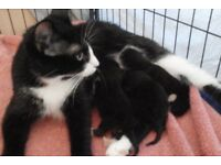 """*'Deposits'*"" Kittens ""*'Newborn'*"""