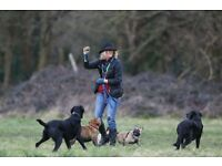 Engergetic Trainee Dog walker/Driver required for Fulham/Putney area.