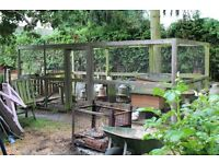 chickens x 4, large pen, hut, feeders STAMFORD AREA