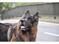 Dog walker available - Hampstead