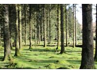 Land wanted for purchase - meadow, woodland, field, all considered