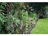 Gardener needed in busy London team