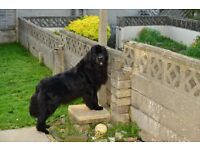 Wanted small property with garden for 2 dogs Wales area