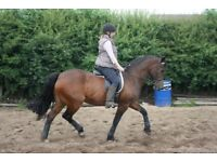 15HH Welsh Section D For Loan
