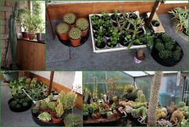 CACTUS and HOUSE PLANTS.