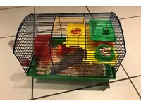 Roborovski Dwarf Female Hamster and Full Cage setup For Sale £40