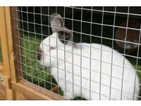 brand new large rabbit hutch, BUNNY BUNKER