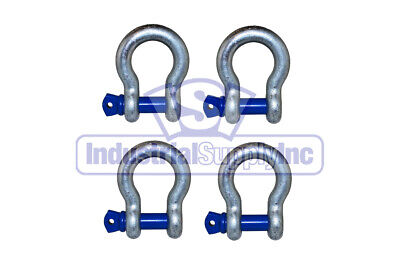 Anchor Shackle | Clevis | Alloy Screw Pin | 5/8