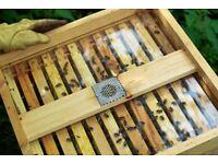 National Beehive See Trough Crown Board