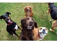 WANTED- approx 1 acre for doggy daycare
