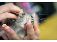 Pet Rat Show, and fun educational family day out - 16/12
