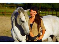 Educational Horse Share With Equine Behaviourist and BHSAI