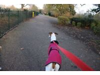 Pups Go Walking dog walkers! We are Friendly affordable and professional