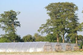Farm worker for organic market garden