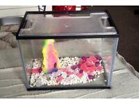 24 litre fish tank