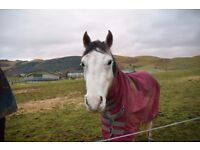 Pony for Loan/Possible Sale