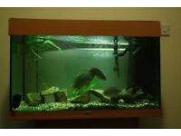 Large fish tank 80cmx50cmx35cm with stand and equipment