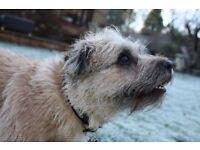 Dog Walker in Berkshire Area