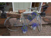 Display vintage bicycle ideal for wedding