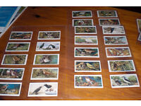 JOB LOT OF OLD CIGARETTE CARDS BY VARIOUS MAKERS