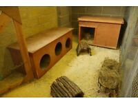 10 x 5 ft rabbit/Guinea pig pen/run with bedroom and play area.