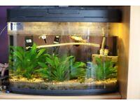 Fish tank 60litres