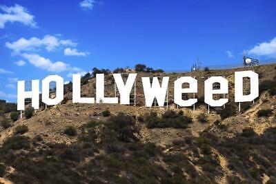 Hollywood Wall Decor (Hollyweed Hollywood Sign Funny Cool Wall Decor Art)