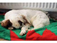 PROFESSIONAL DOG WALKING & PET SITTING (Ards & North Down)