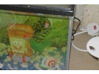 Sponge bob tank