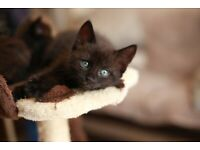 Super Cute-Friendly Kittens for sale