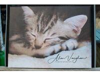 Unique sleepy head cat canvas photo picture 30cm x 40cm