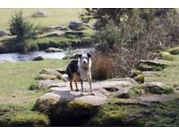Kielia Canine Services - Experienced, Trustworthy, Caring Dog Walker
