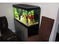 Fluval Roma 200l Aquarium for sale - £275 - includes stands, fish and loads of other stuff